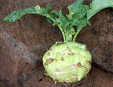 Kohlrabi.  Source: Wikipedia